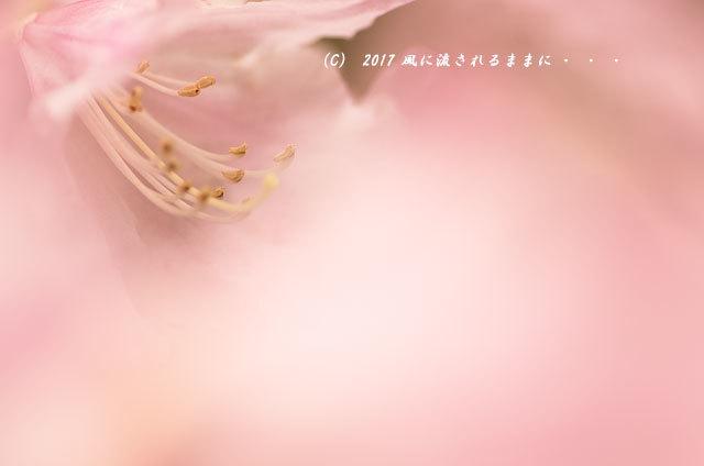 奈良・船宿寺に咲くツツジの花など9