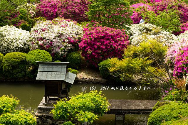 奈良・船宿寺に咲くツツジの花など4