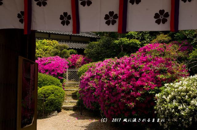 奈良・船宿寺に咲くツツジの花など6