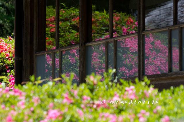滋賀・雲迎寺(さつき寺) サツキの花 6月3日撮影3