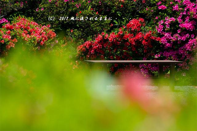 滋賀・雲迎寺(さつき寺) サツキの花 6月3日撮影6
