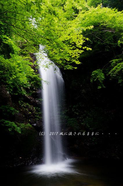 涼を求めて! 三重・白藤滝2