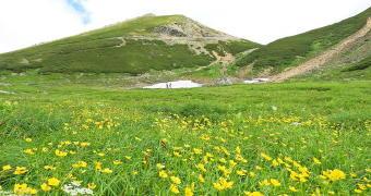 3961-340高山植物