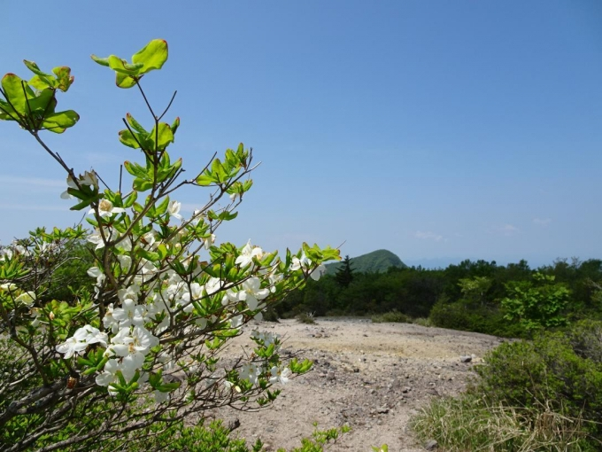 シロヤシオと荒山