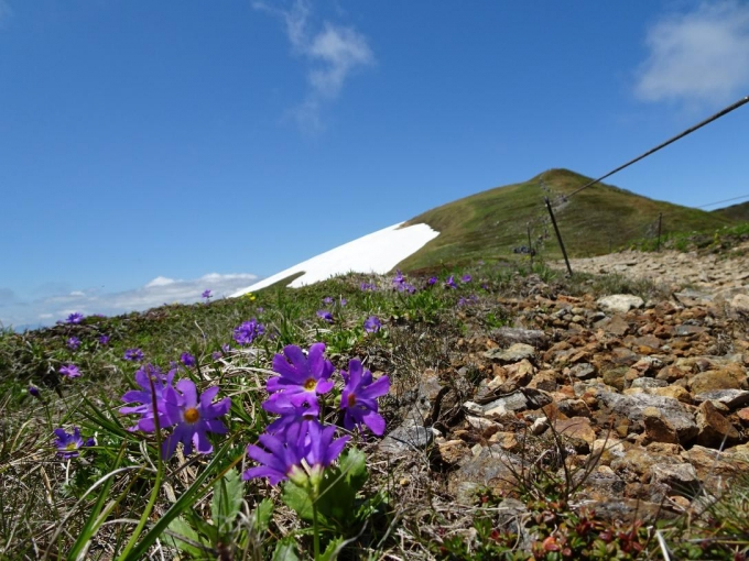 お花畑から平標山
