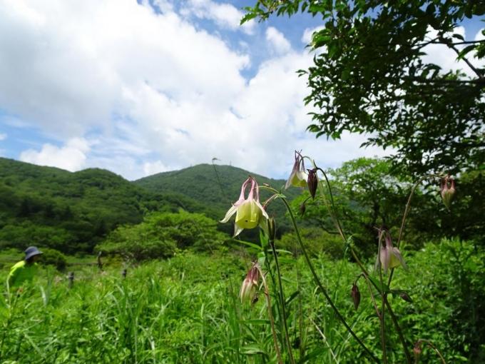 ヤマオダマキと地蔵岳