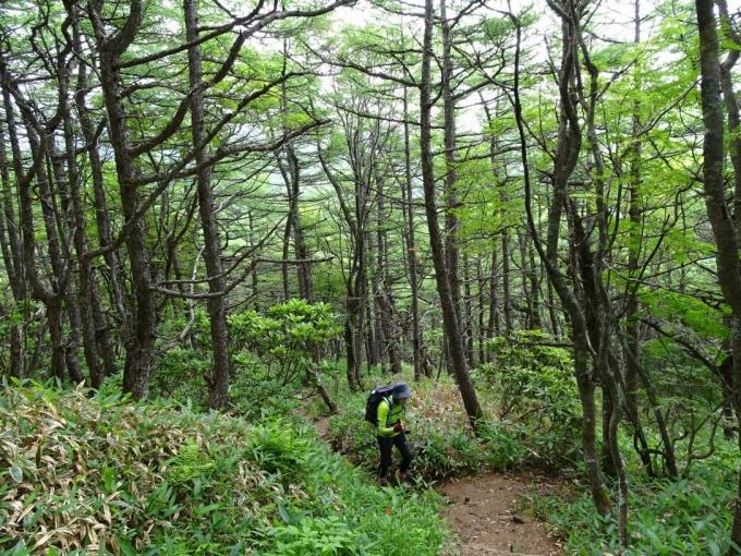 樹林帯を歩く