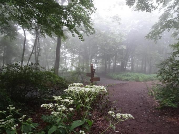 霧は濃くなって