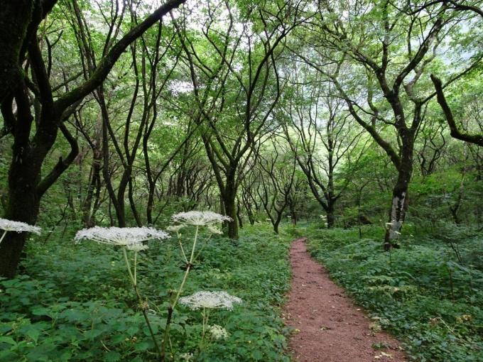 樹林の道を