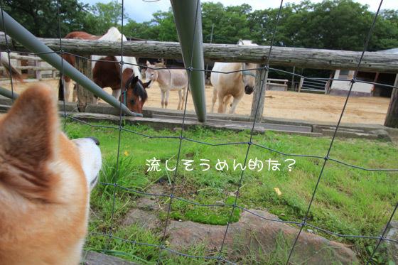 minamigaoka5.jpg