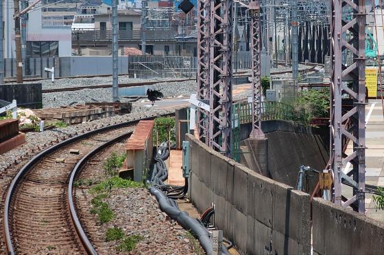 JR鴫野駅工事中06