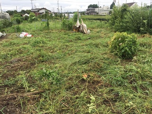 刈り込み後のスイカ畑