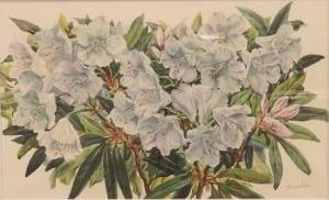 「石楠花」