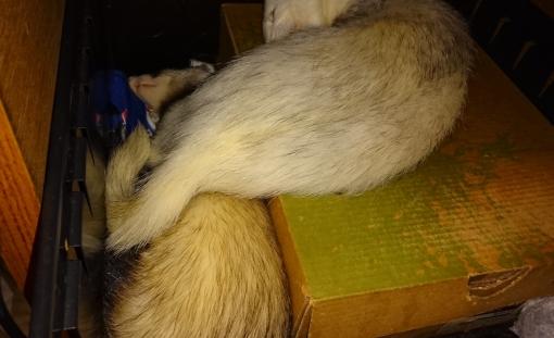 2017年05年27日の秘密基地で眠るマルコとミッキー
