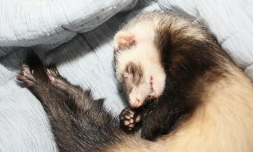 気持ちよく眠るミッキー2