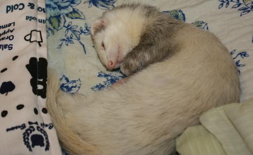 疲れて眠るマルコ