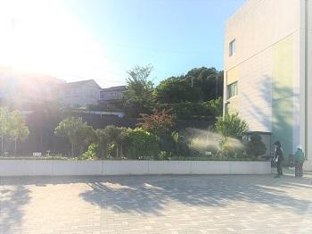 学校花壇 (3)