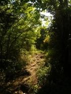 濃い緑の登山道