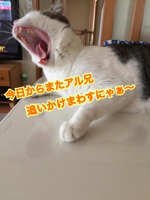 IMG_1585.jpg