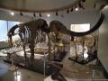 k42葛生化石館