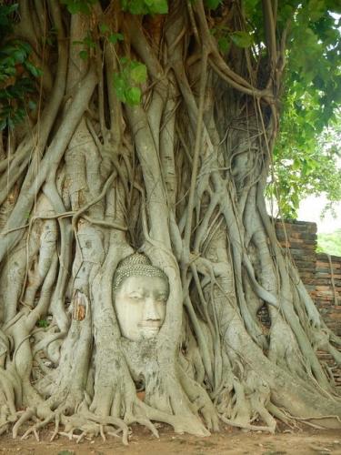 20170512ayutthaya (15)
