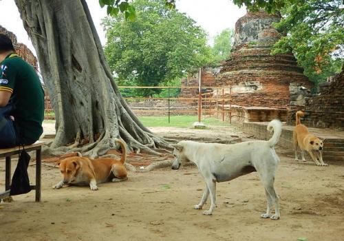 20170512ayutthaya (22)