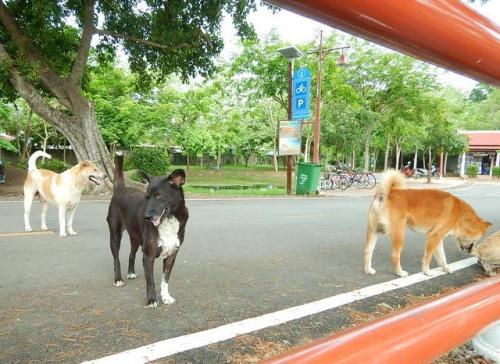 20170512ayutthaya (28)