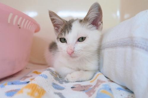 s-20170724221147ca3 子猫さん。
