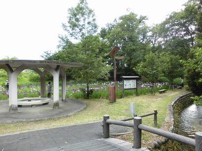 ahanasyoubu0616-1.jpg