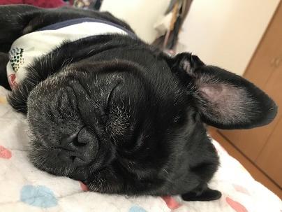 りきの寝顔
