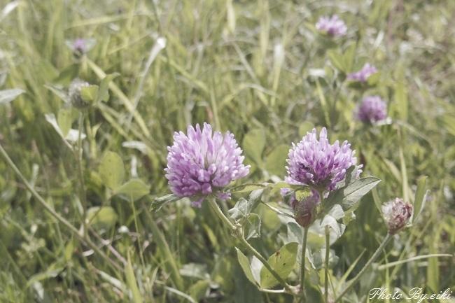 お台場付近のお花の写真