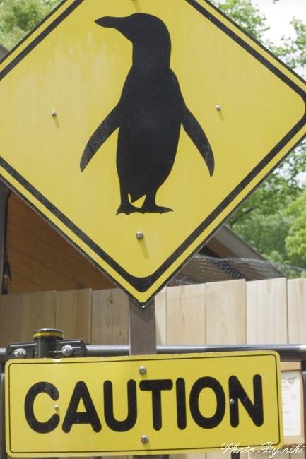 埼玉県こども動物自然公園のペンギンヒルズの写真
