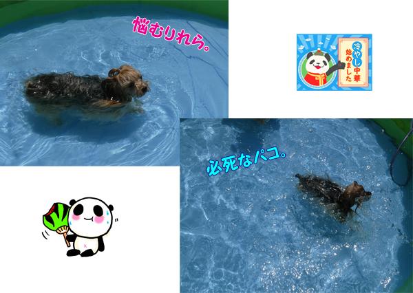 ③リーパコ泳ぐ? のコピー
