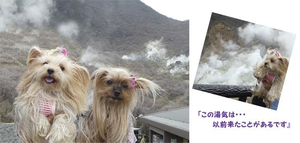 3日め④早雲山 のコピー