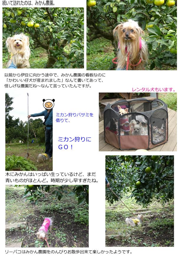 2日め③みかん農園 のコピー