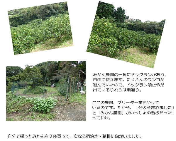 2日め④みかん農場 のコピー