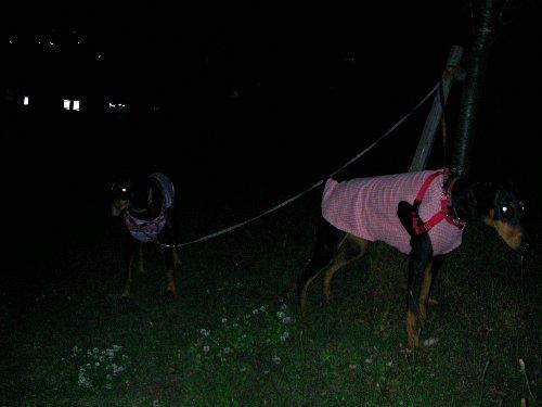 201705172209夜の公園②-1