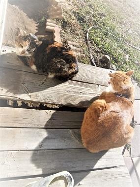 外猫ミケ子と