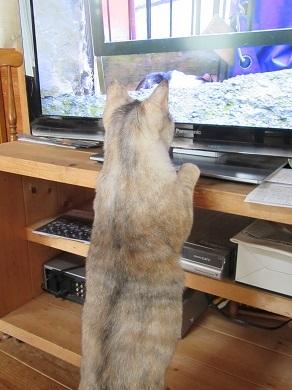 趣味テレビ鑑賞