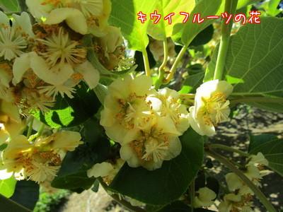 I9dFgQKmD_J_ElW1495620031_1495620111.jpg