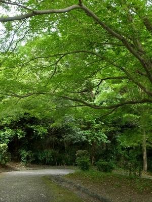 桃山御陵道1705