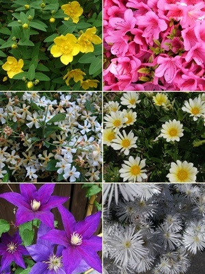 初夏の花たち1705