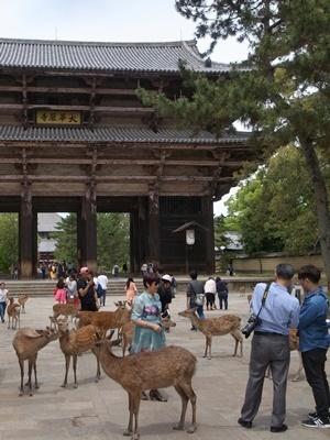 奈良観光客*鹿1705