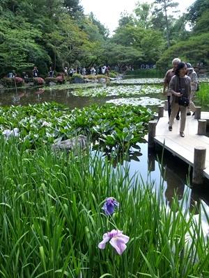 平安神宮神苑花菖蒲1706