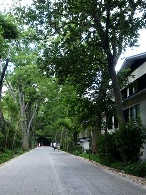 下鴨神社糺の森マンション建設1708