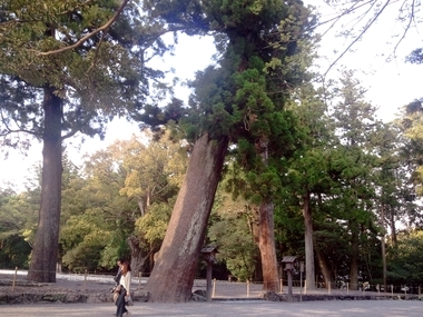 このぉ木 何の木!
