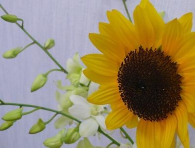 本物の向日葵