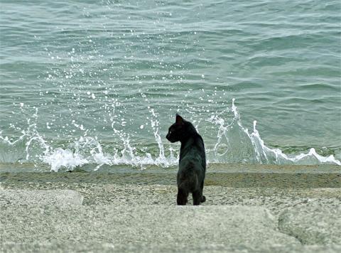 ネコたちと島の風景8ブログ