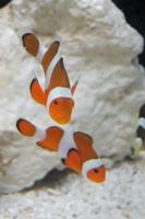 BL170910イオン水族館1IMG_4257