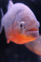 BL170910イオン水族館2IMG_4271